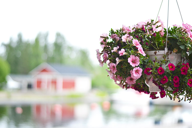 Travel, Finland, Savonranta, forest, vegetation,lake, wooden house, boat, flowers
