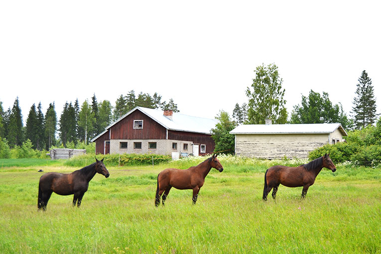 Travel, Finland, Savonranta, forest, vegetation,lake, wooden house, horses