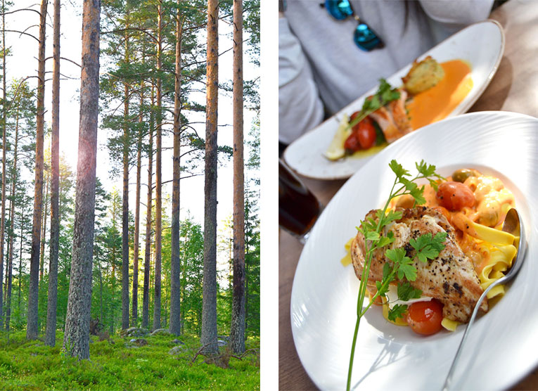 Finland, Savonlinna, Kerimaki, forest, trees, nature, food