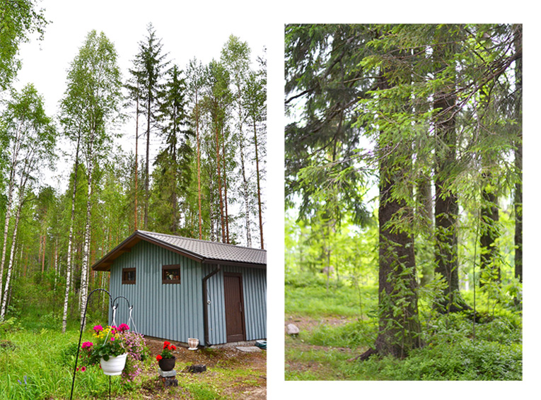 nature, finland, lakes, kuopio, wooden house, trees, forest